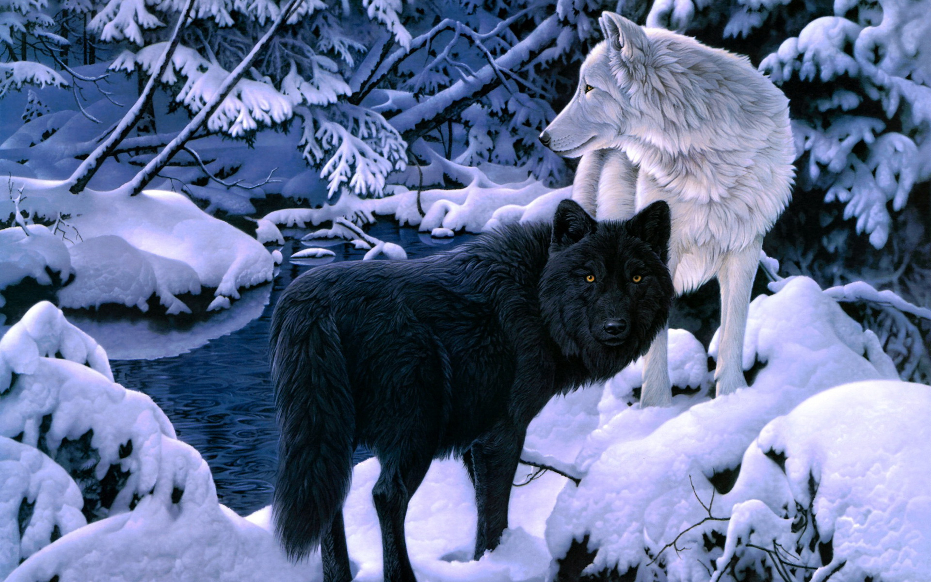 Wolf Wallpapers And Backgrounds Hd 18182 Wallpaper Wallpaper hd 1920x1200