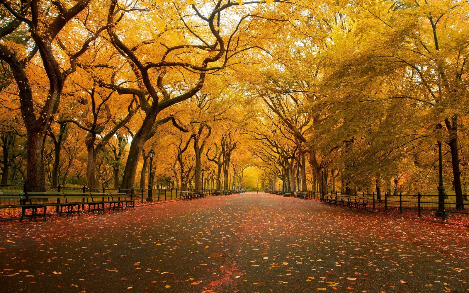 Free Download Autumn Scene Wallpaper 16001000