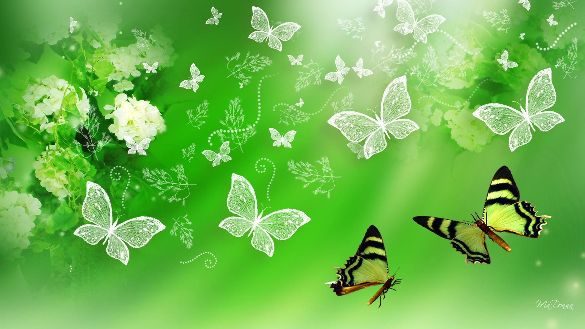 Green Hydrangea and Butterflies wallpaper   ForWallpapercom 1921x1080