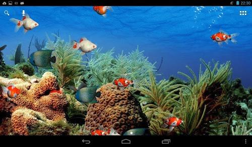 Aquarium Live Wallpaper jest yw tapet prezentujc akwarium z 500x293