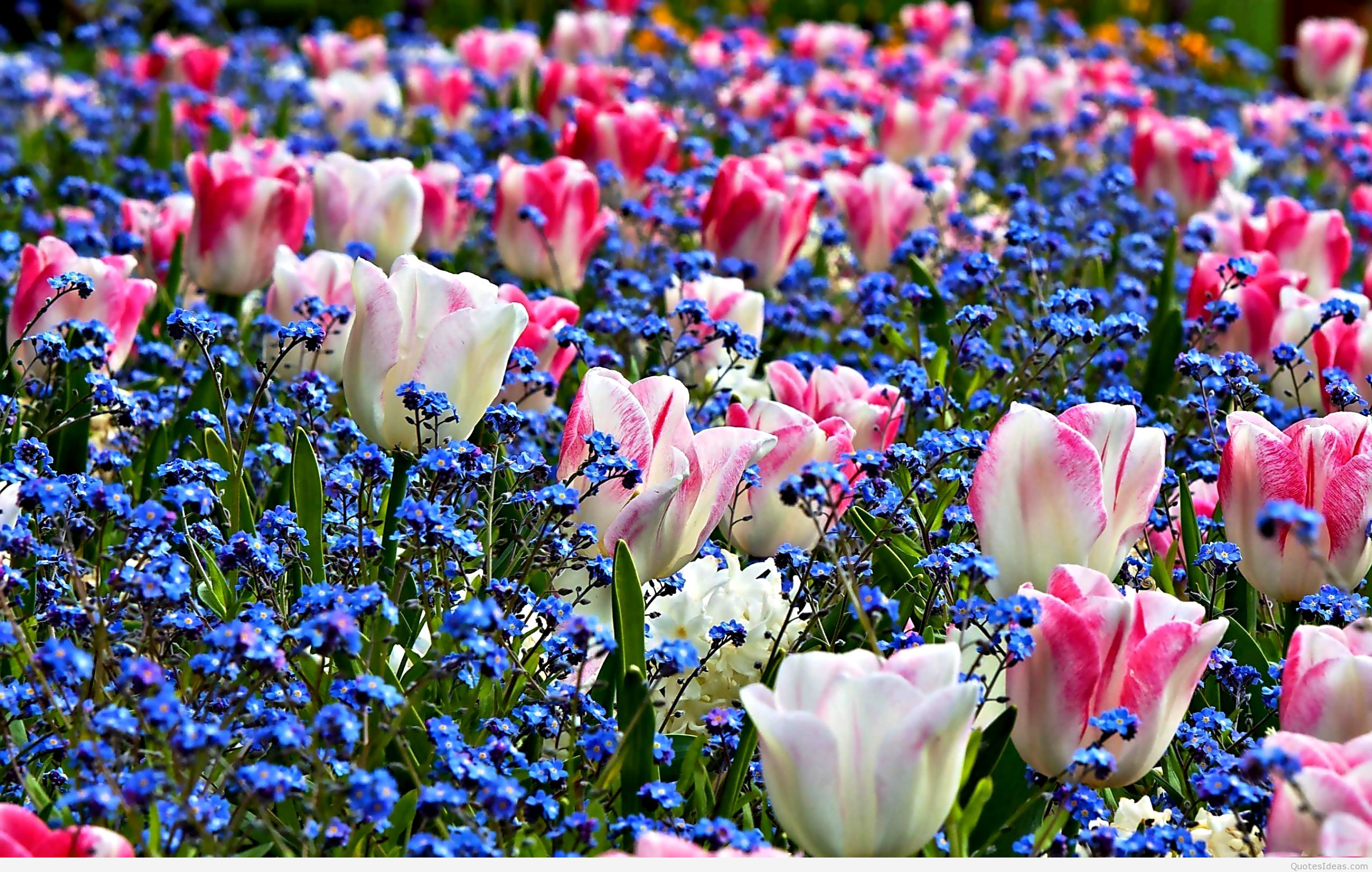 Nice HD Wallpapers Collection 44 of Spring Flowers Awesome 2560x1627