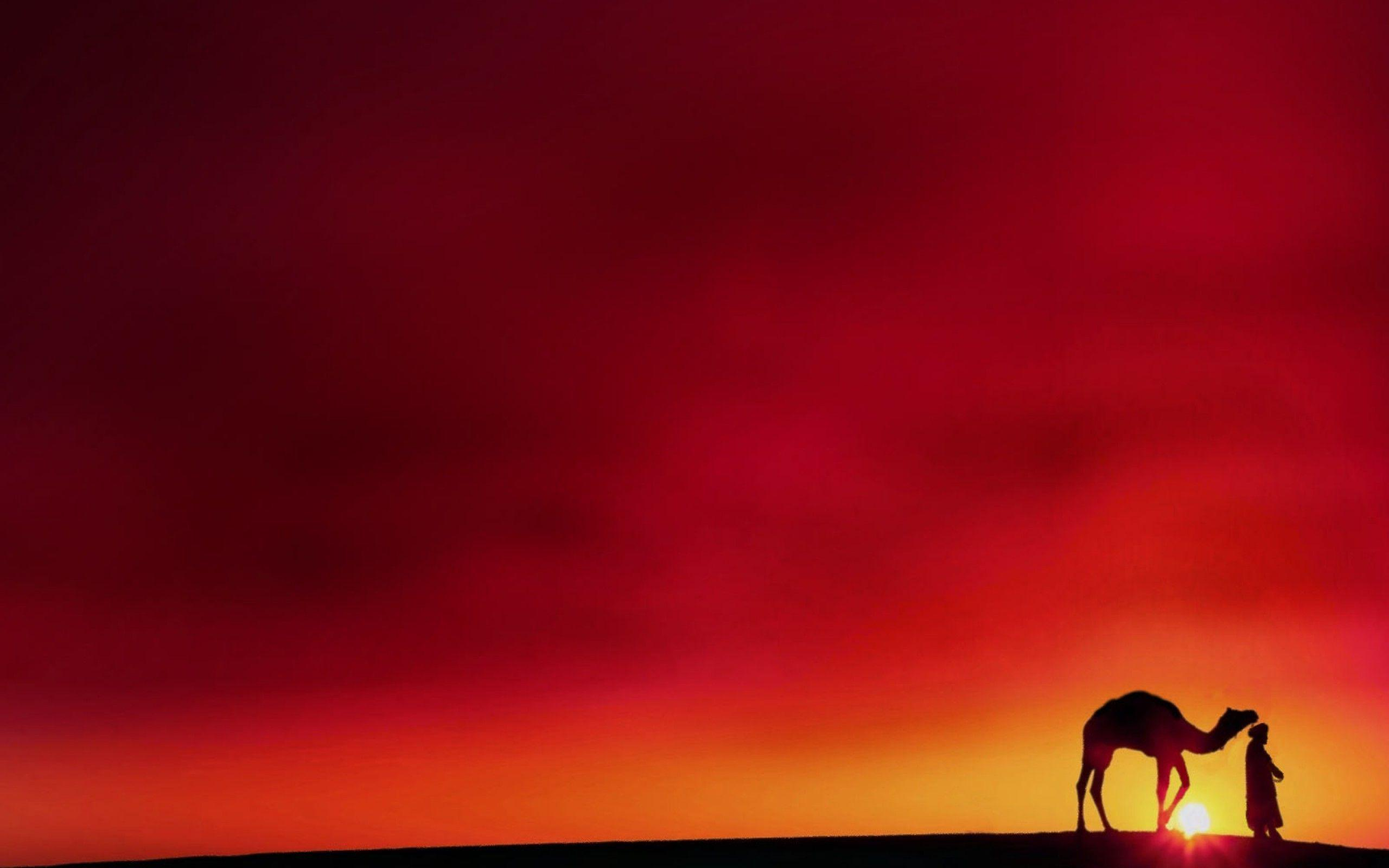 Camel Wallpapers 2560x1600
