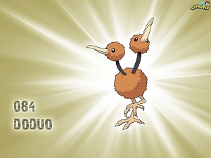 Doduo wallpaper 300x225
