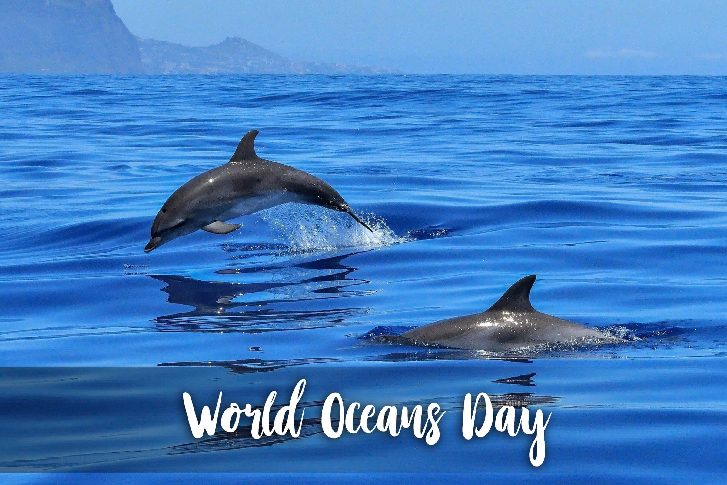 Happy World Oceans Day Save Dolphins Hd Wallpaper 2400x1600