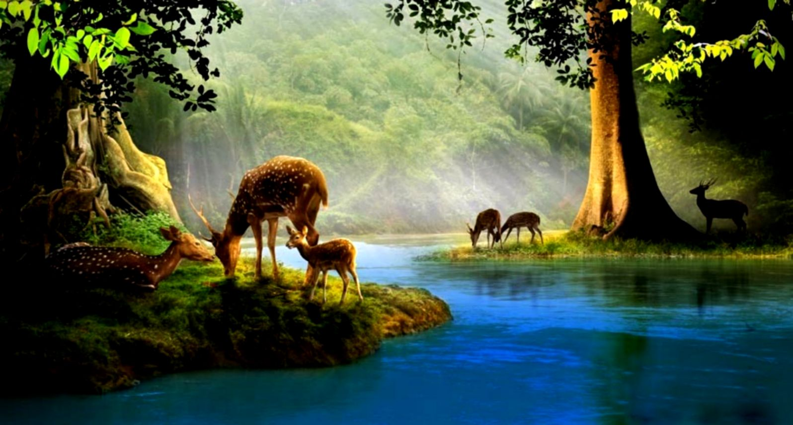 Deer Animals Hd Wallpaper Mobile Wallpapers 1596x855