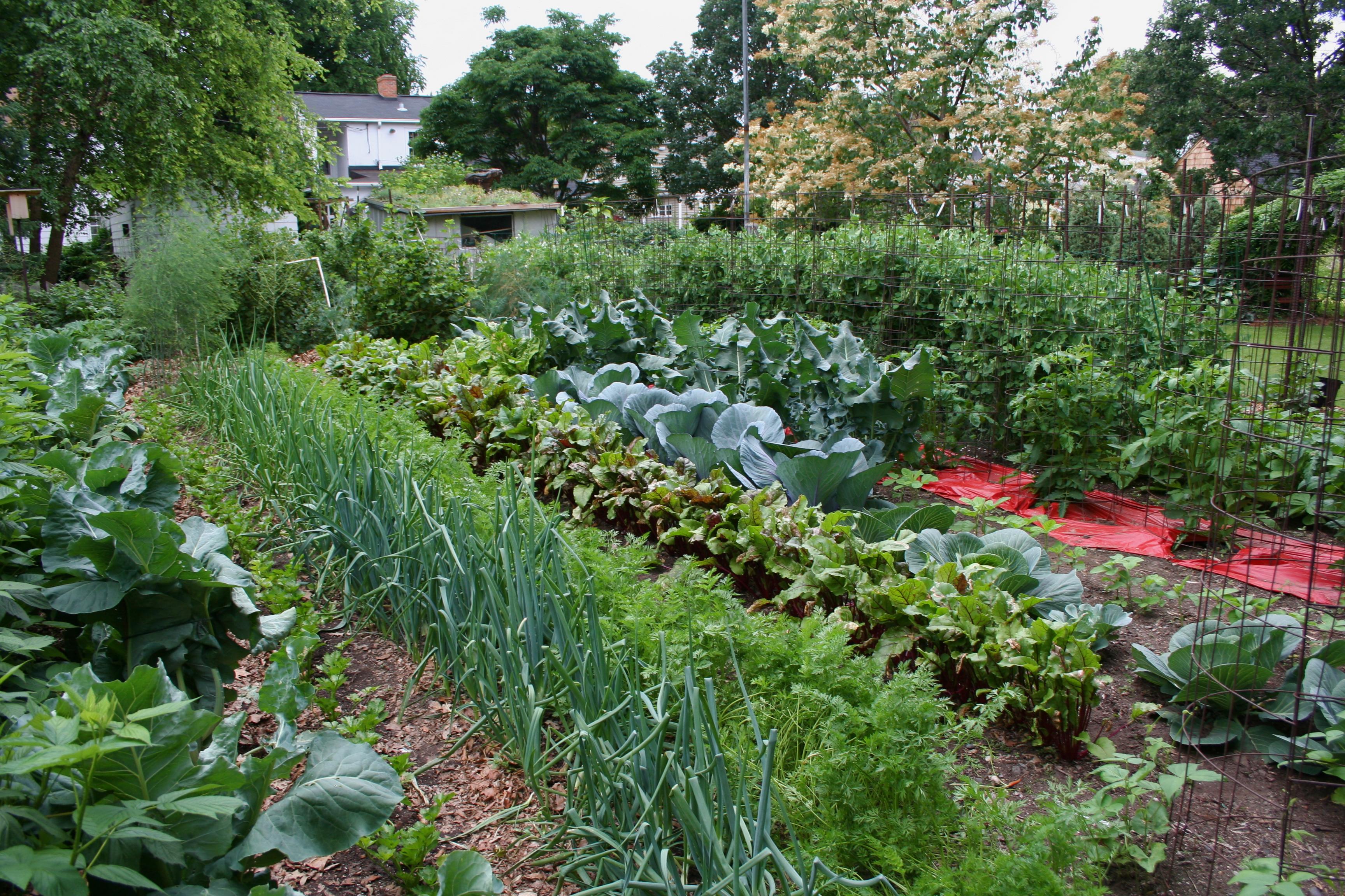 Download Vegetable Garden Wallpaper Size 3456x2304 Amazingpictcom Hd