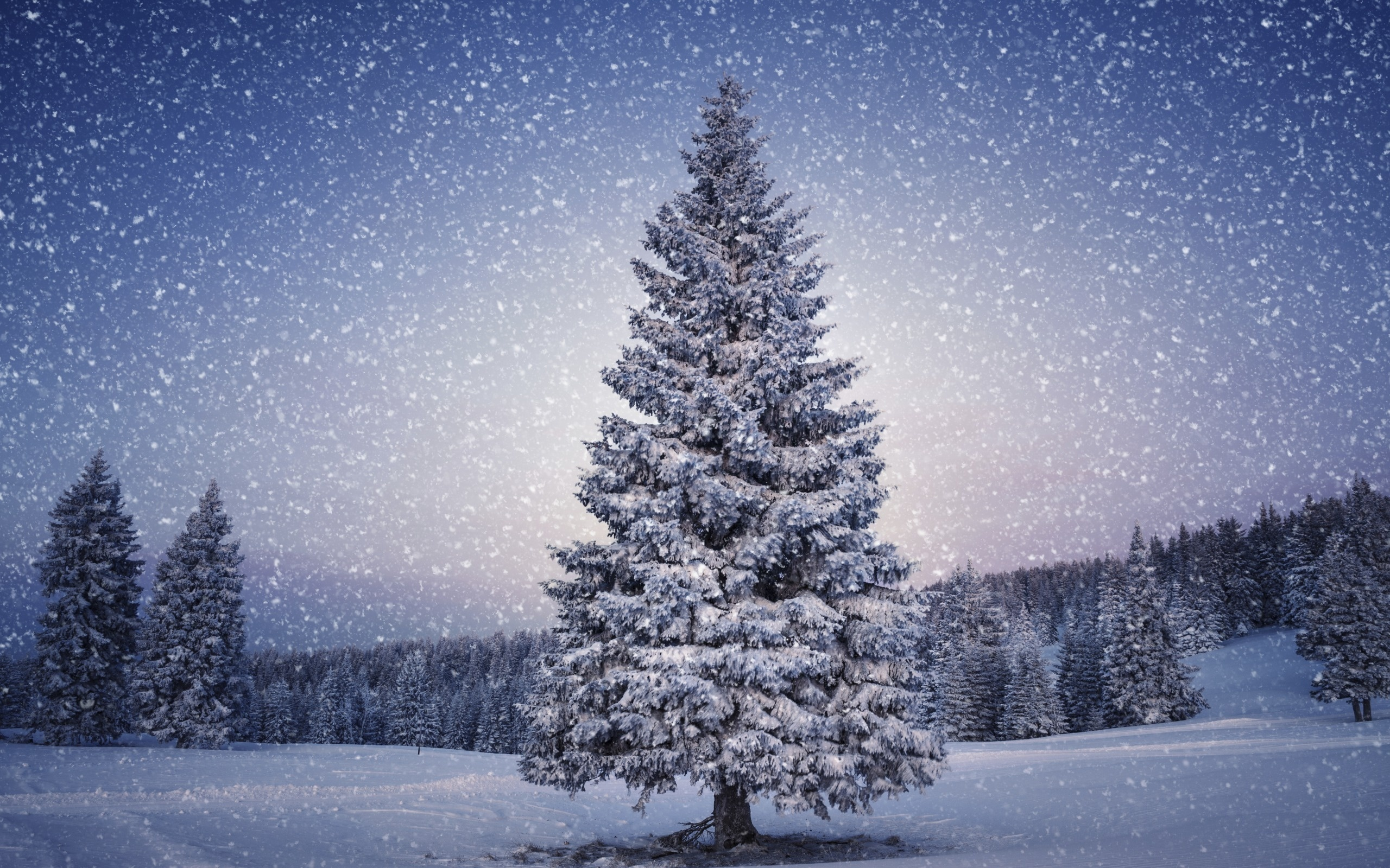 Snowy Christmas Tree HD Wallpaper 4268 HD Wallpaper 3D Desktop 2560x1600
