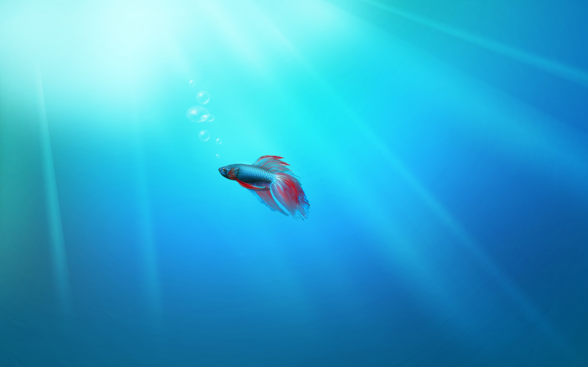 Windows 7 Beta Fish wallpaper   46456 1920x1200