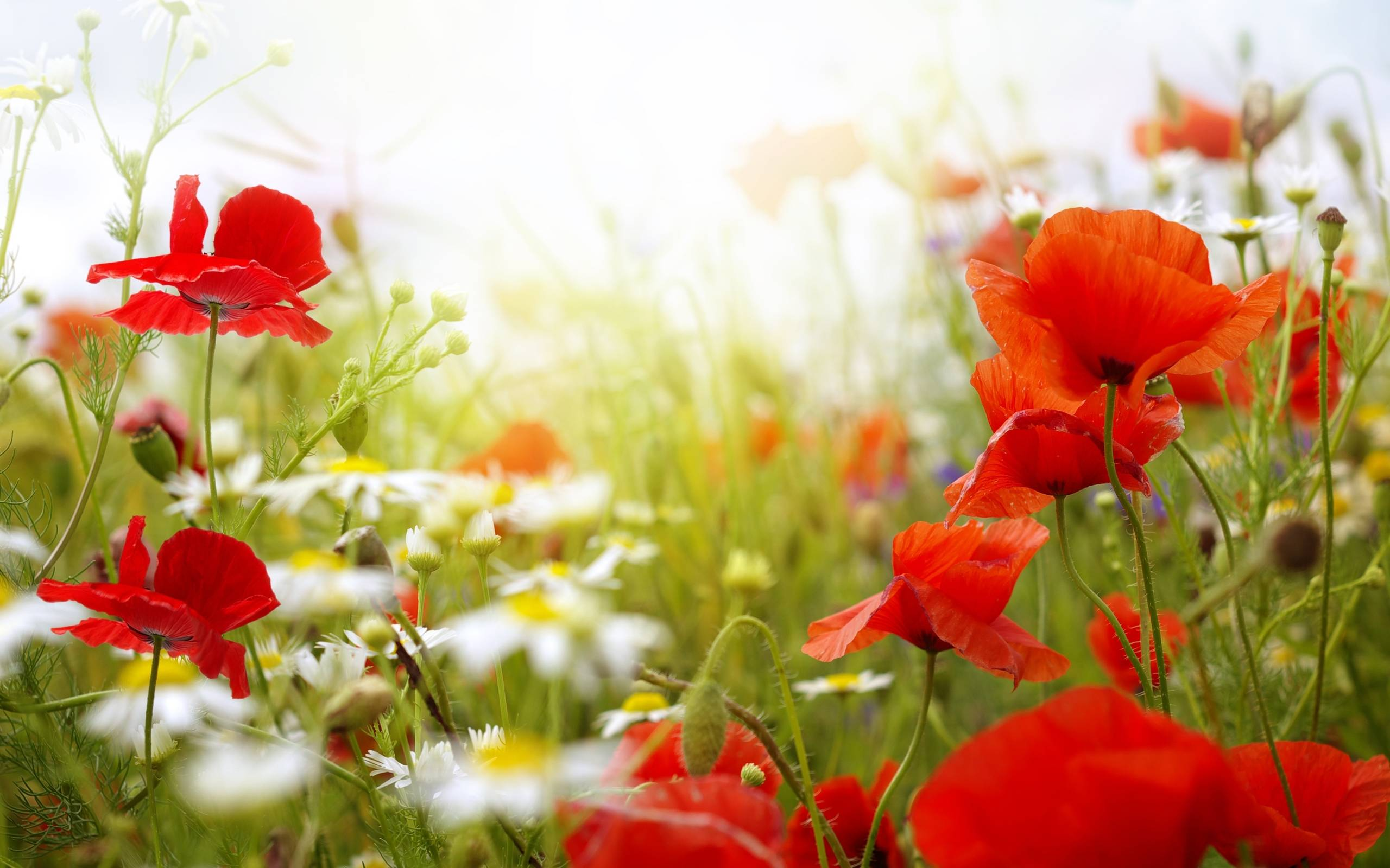 Spring Flowers Wallpapers Wide at Landscape Monodomo 2560x1600