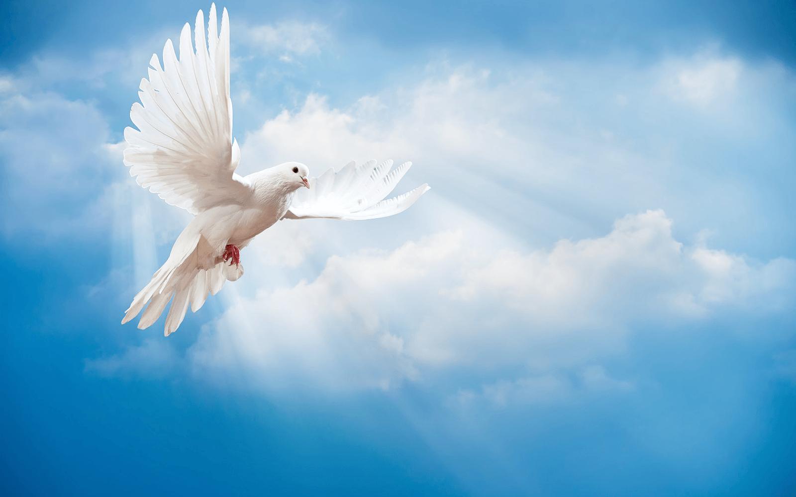 Wallpapers Hd Flying Birds Apple Animals Blue Sky Desktop: Clouds And Birds Wallpaper