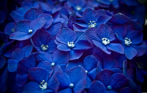 screensavers mobile flowers animated cell phone screensavers 596x380