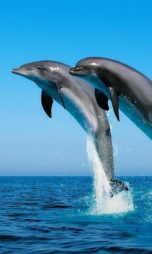 View bigger   Dolphins Live Wallpapers for Android screenshot 307x512