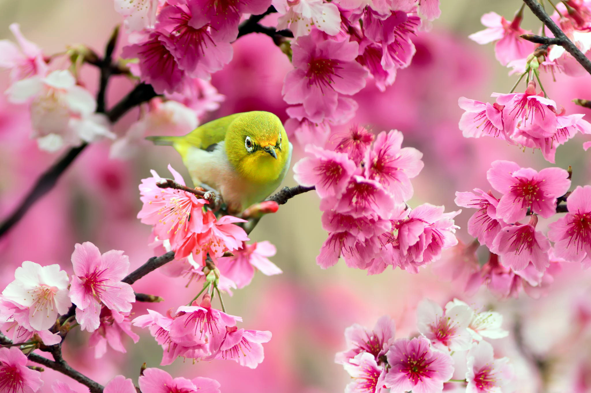 Spring Birds And Flowers Wallpaper Wallpapersafari