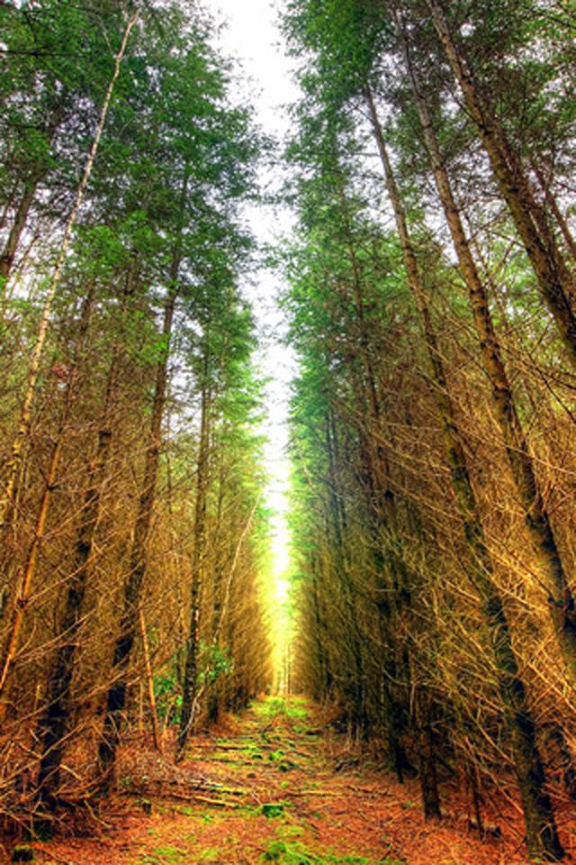 Forest Wallpaper 640x960