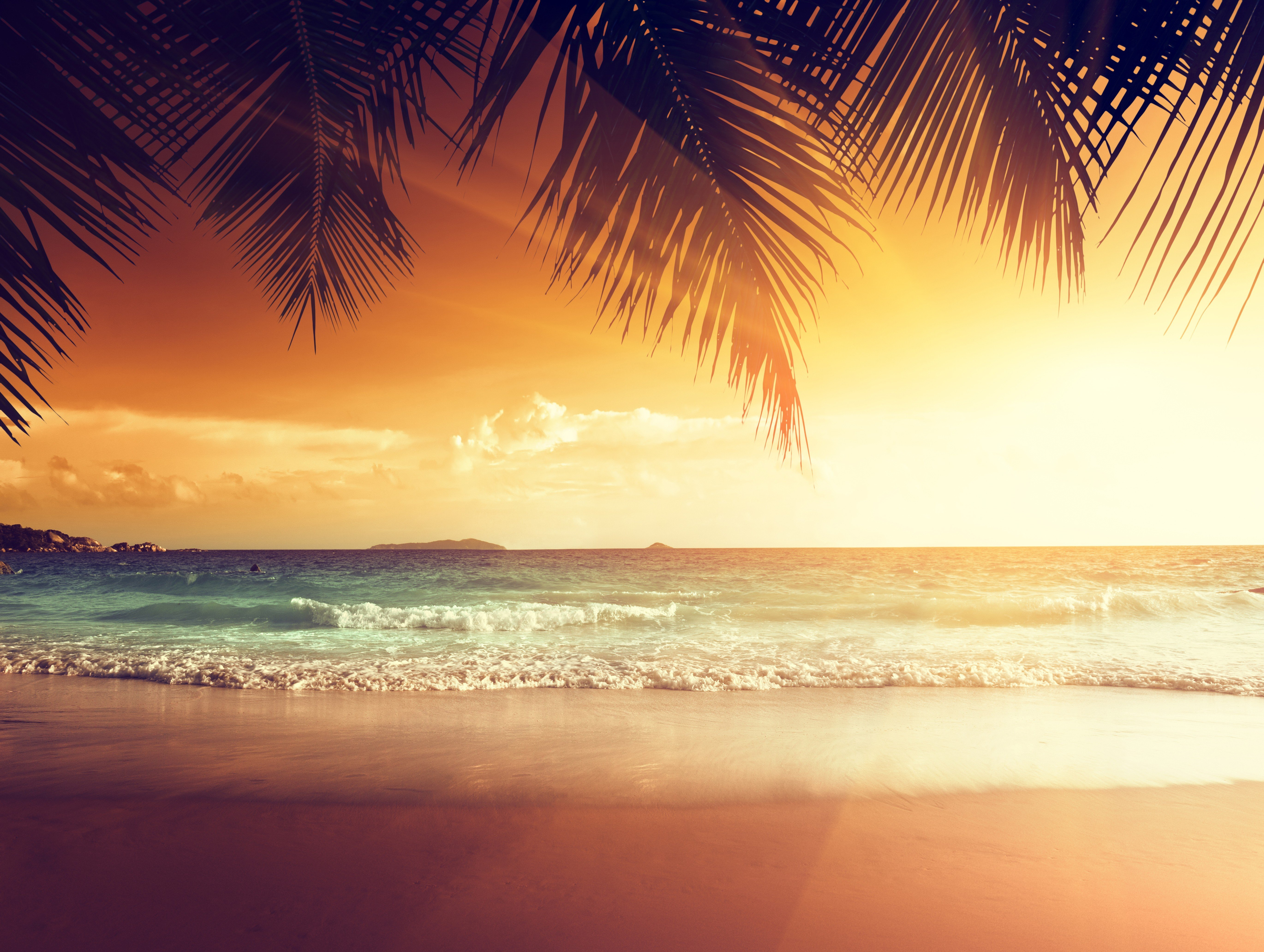 Wallpaper Tropical Sunset Beach Summer Palm Coast Sea Nature 5479x4128