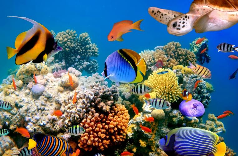 Vibrant Coral Reef Wall Mural Murawall 764x500