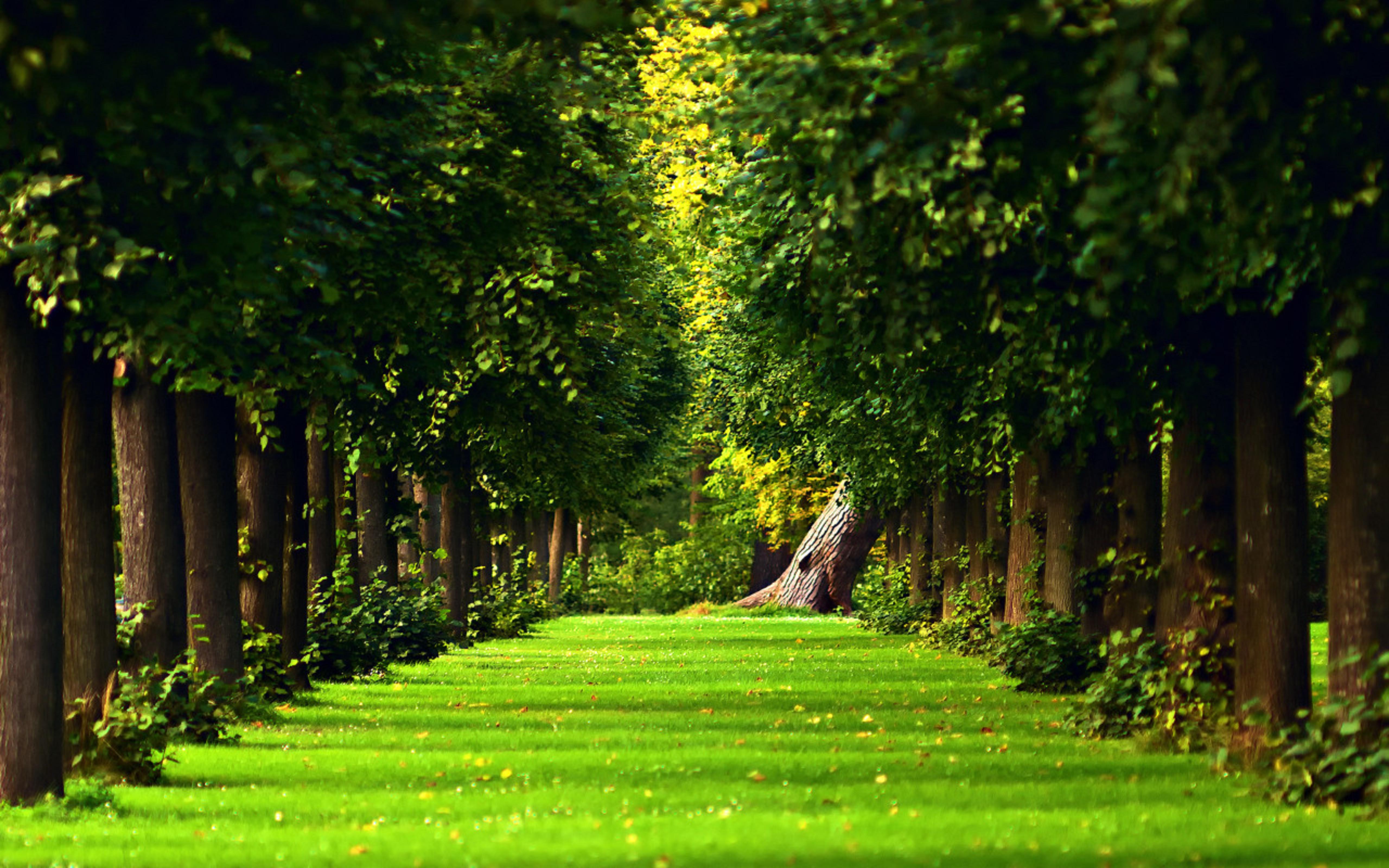 32 Green Nature Wallpapers On Wallpapersafari