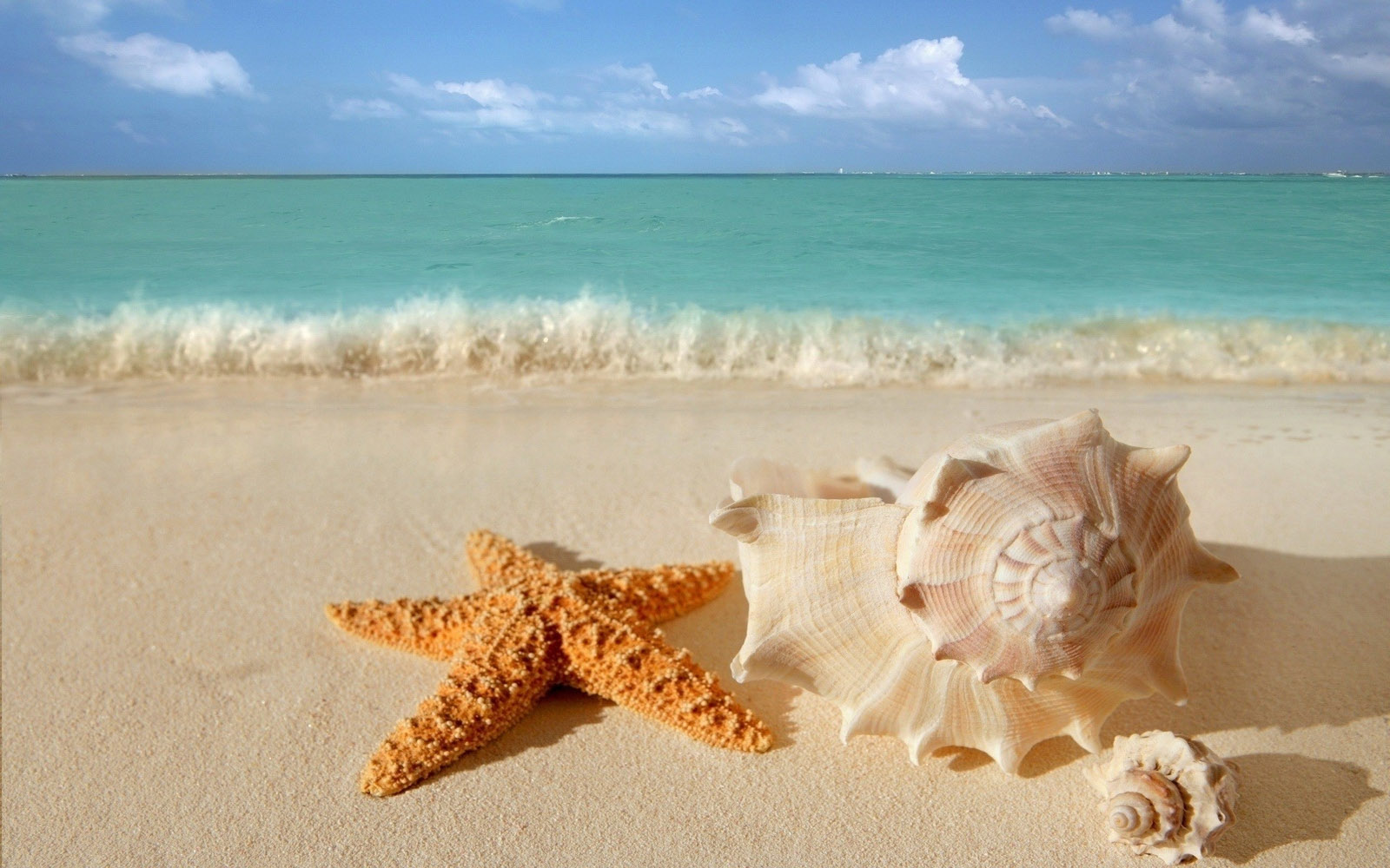 starfish seashells beach sand wallpaper   View All 1600x1000
