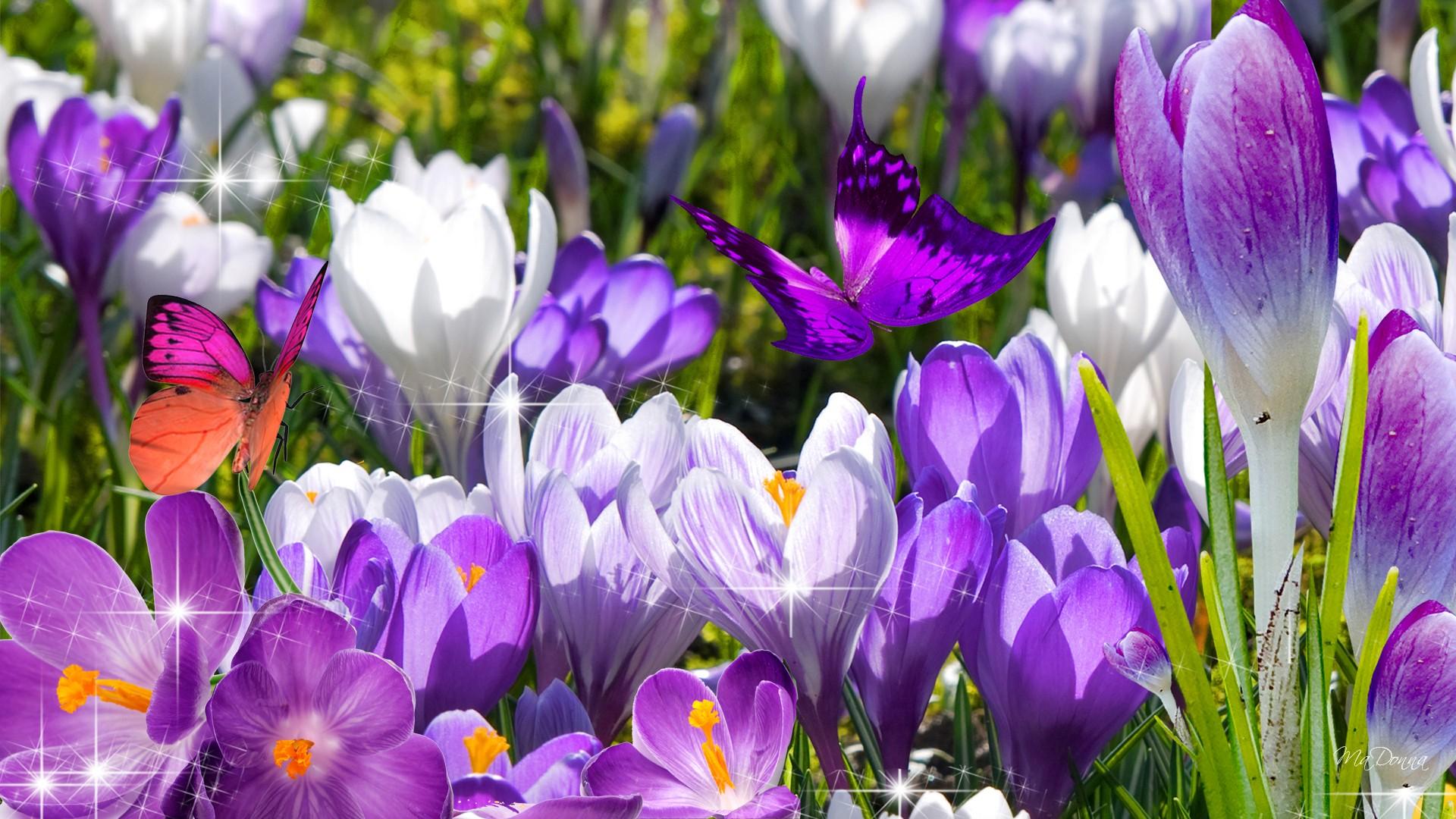 download de eerste bloemen springs wallpaper ForWallpapercom 1920x1080