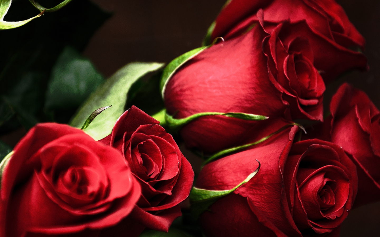red roses most popular rose rose wallpapers beautiful rose red 1440x900