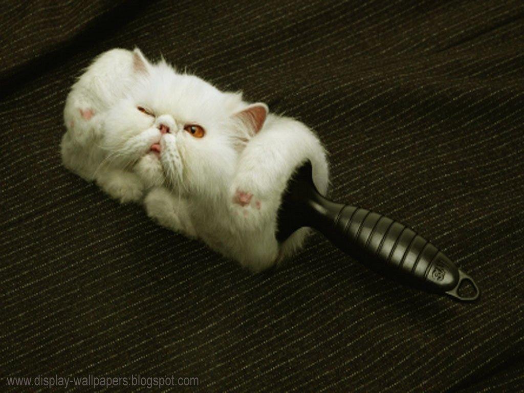 Collezione Tumblr Gatti Sfondi - Immagini di sfondo HD