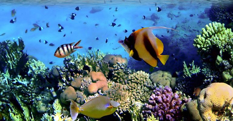 Coral Colony Wallpaper Wall Decor 769x400