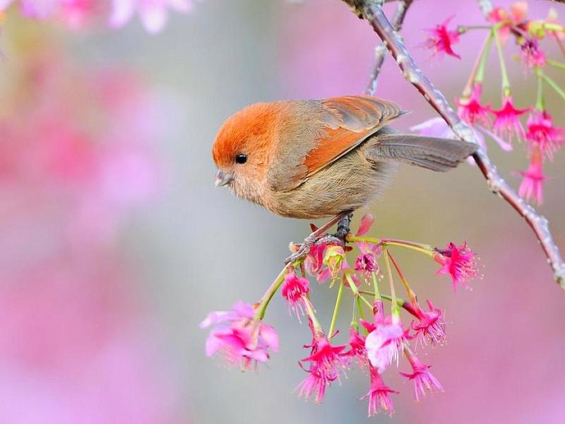 Free Download Beautiful Bird Beautiful Bird Animals Birds Hd