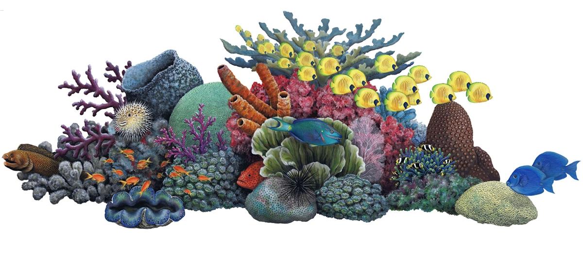 Coral Reef Mural   WallsoftheWildcom 1200x536
