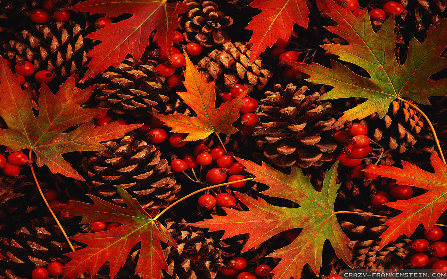 Fall Leaves Widescreen Background Wallpapers 3917 1440x900