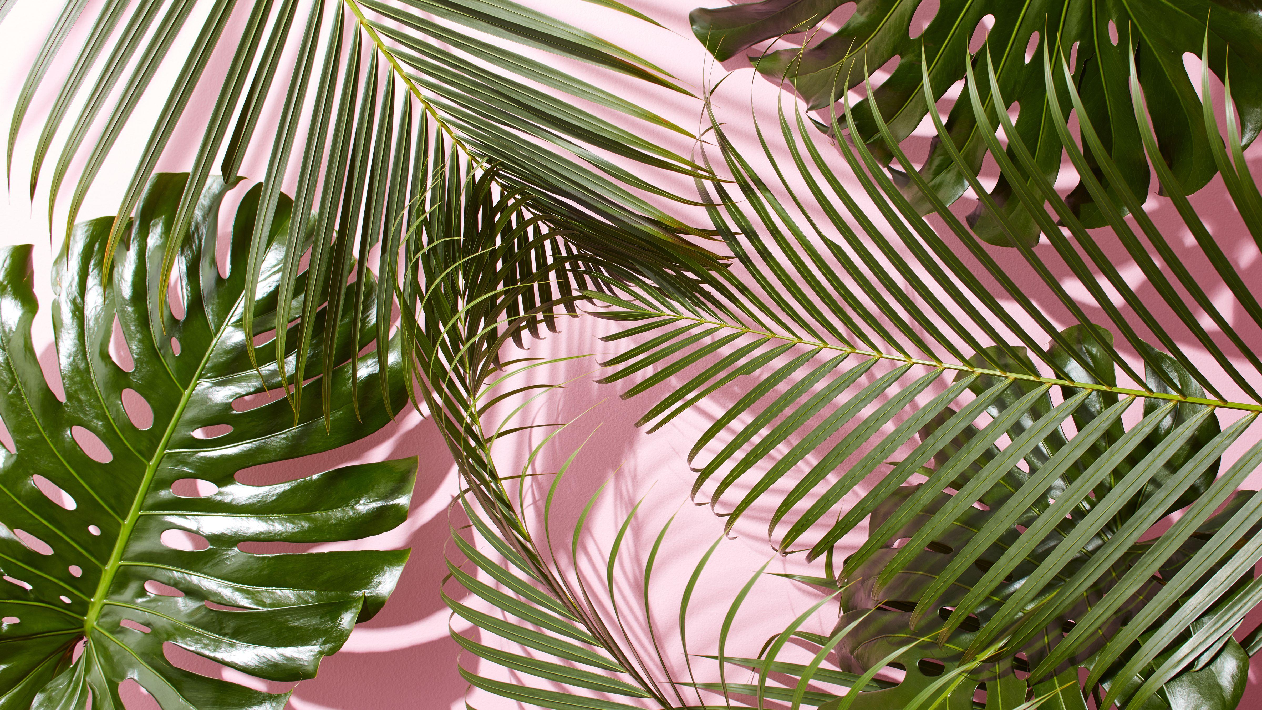 55 Tropical Leaves Desktop Wallpapers   Download at WallpaperBro 4800x2700