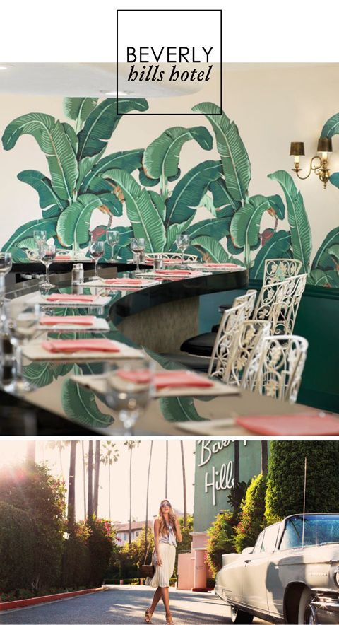 beverly hills hotel palm wallpaper wallpapersafari