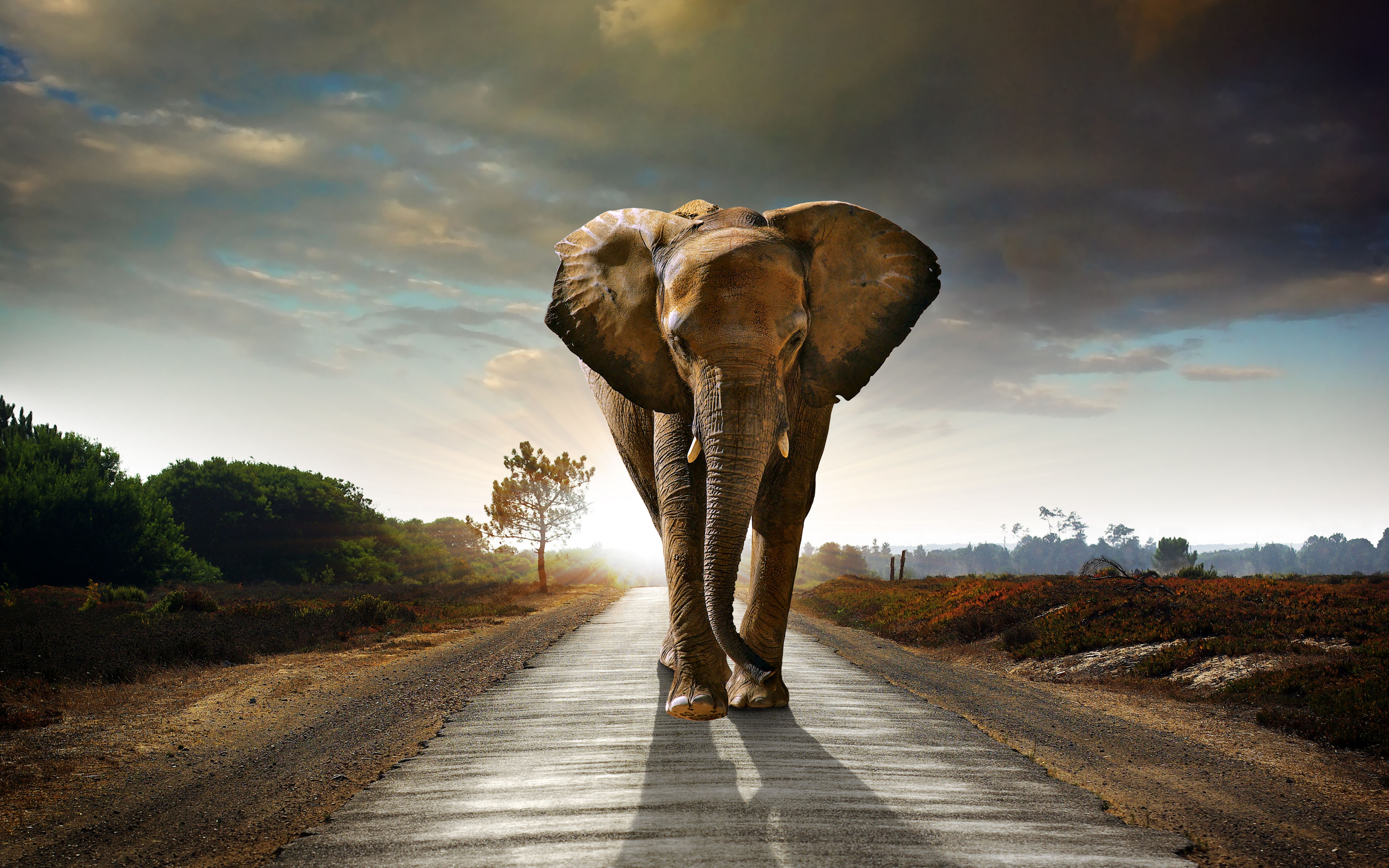 Free Download African Elephant Wallpaper Download 10963