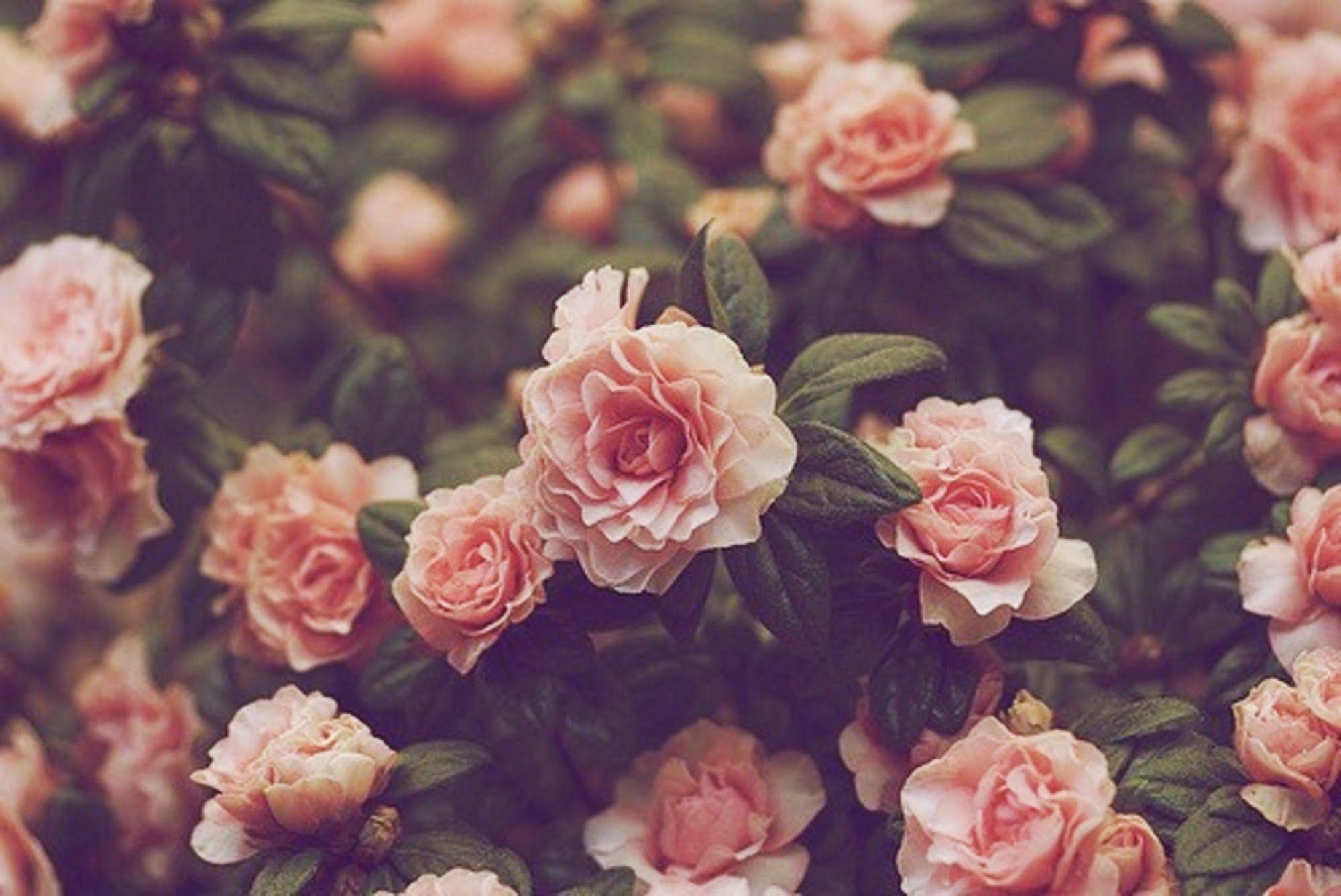 Tumblr Flowers Desktop Wallpapers   Top Tumblr Flowers 2000x1336