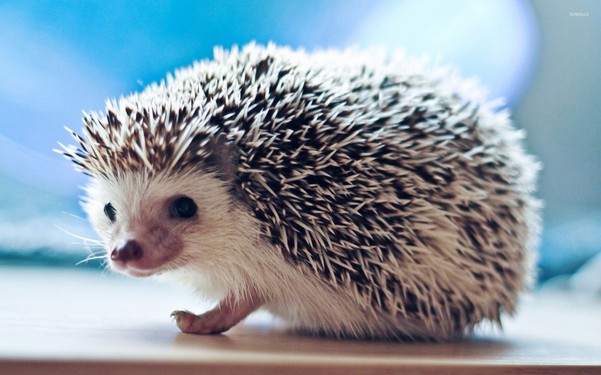 Cute Hedgehog Wallpaper