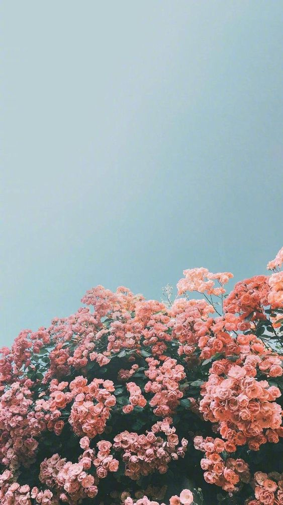 Aesthetic and Vintage iPhone Wallpaper Ideas in 2020 Flower 563x1002