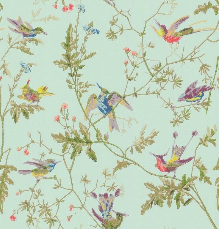 Wallpaper Background Birds 736x771