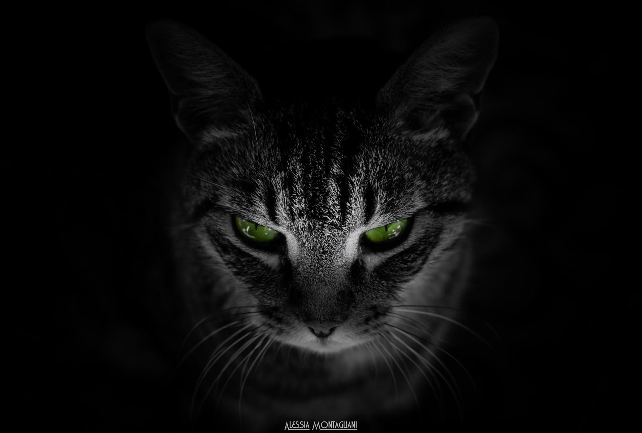 Black Cat Eyes Wallpaper - WallpaperSafari