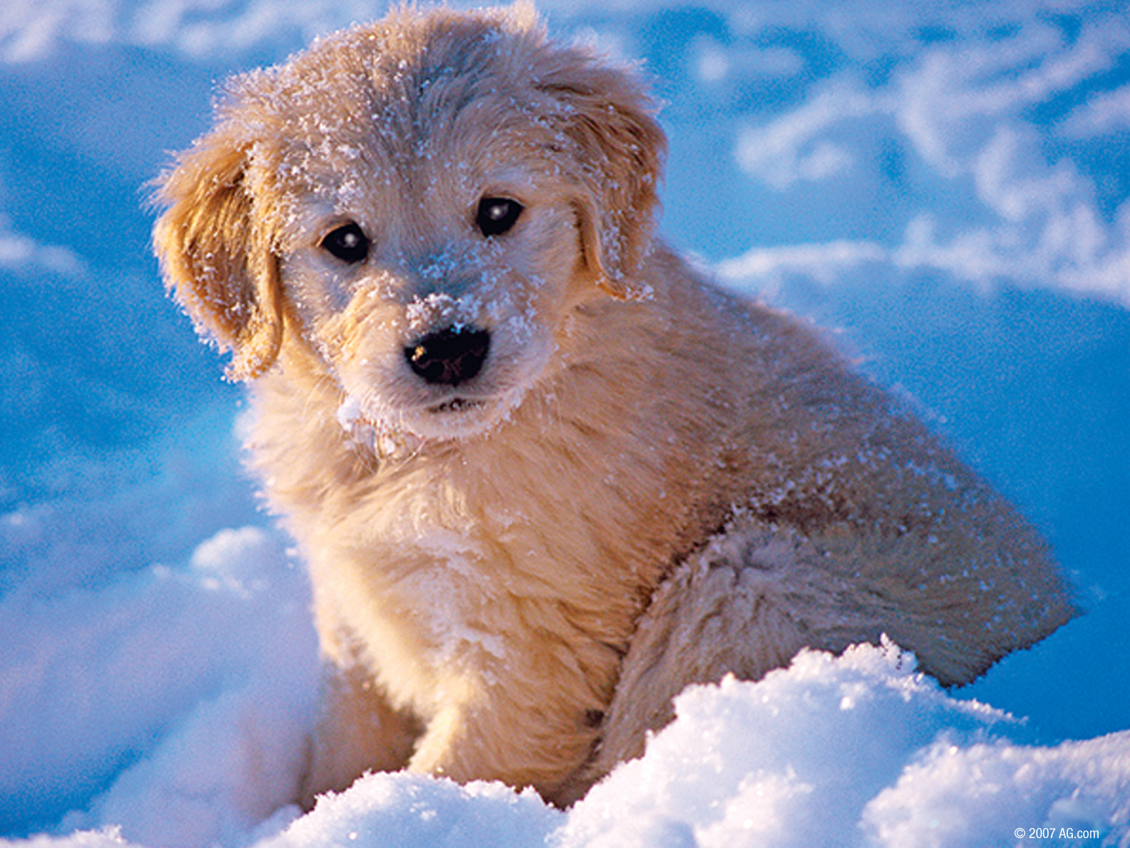 Dogs images soo cute 1600x1200