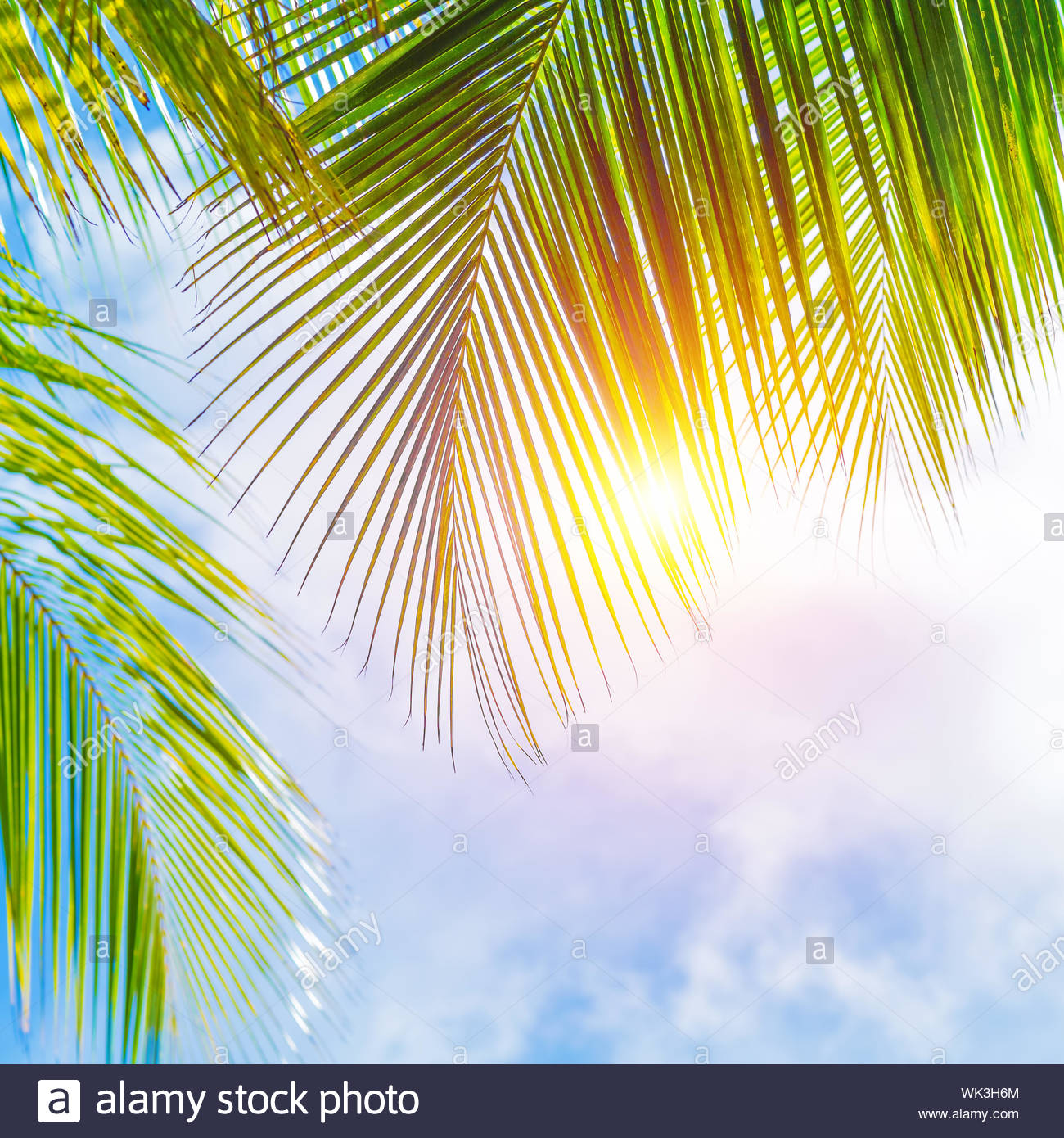 Fresh green palm tree leaves border on blue cloudy sky background 1300x1390