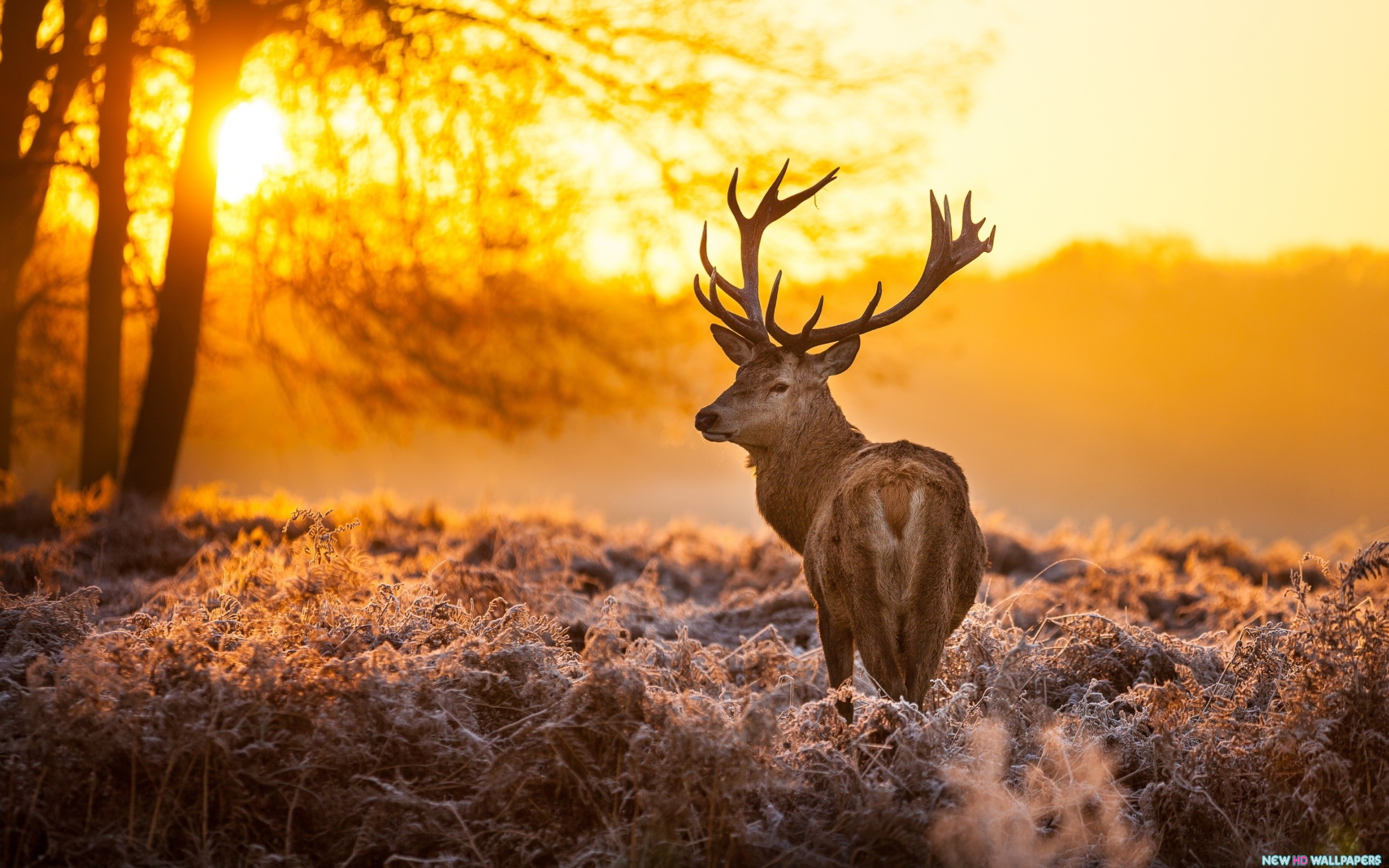 Download Deer Sunset Time wallpaper in Animals wallpapers with all 2560x1600