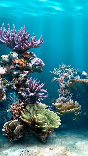 View bigger   Fish Aquarium Live Wallpaper for Android screenshot 288x512