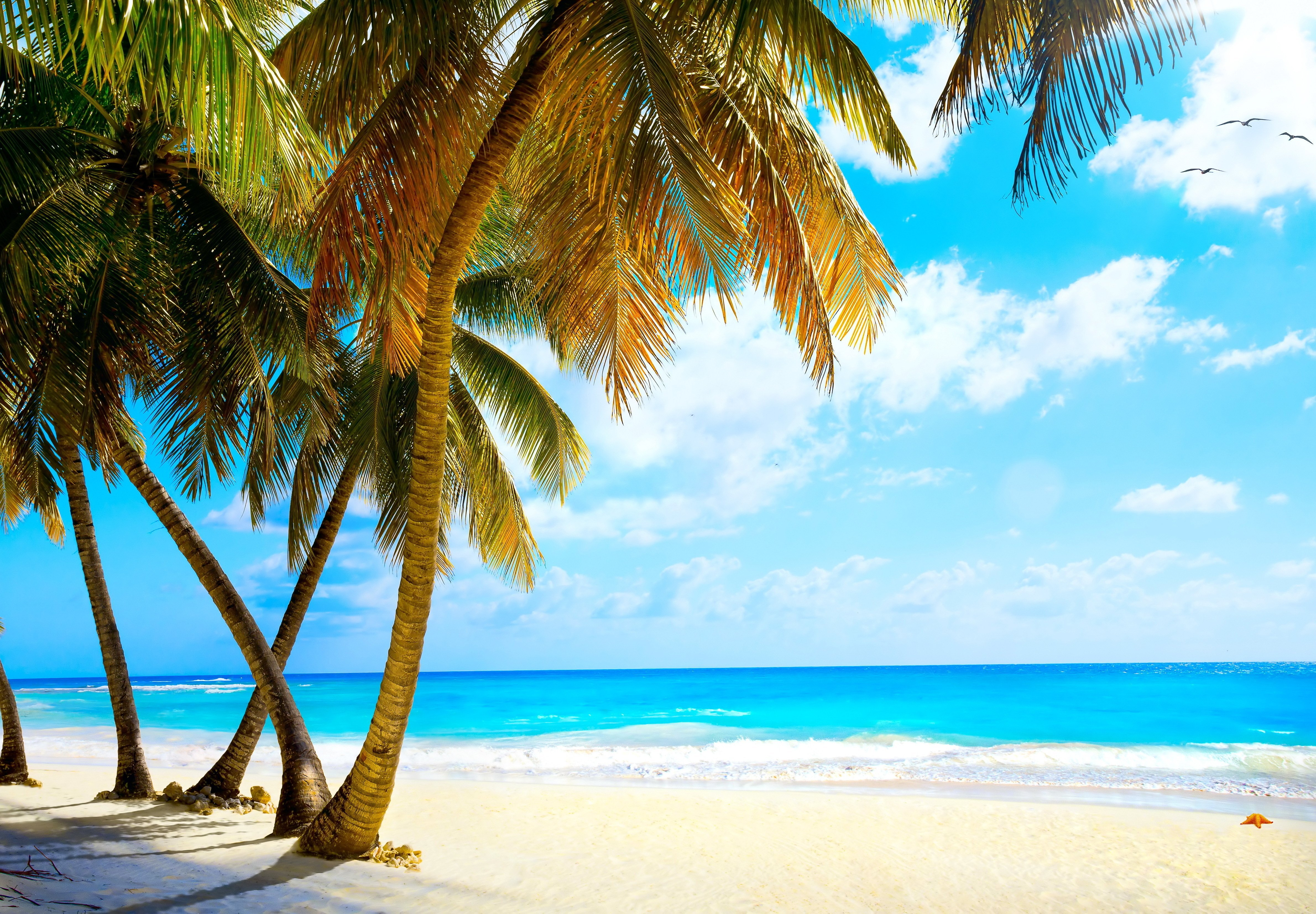 palms vacation tropical sea paradise beach ocean wallpaper background 4760x3304