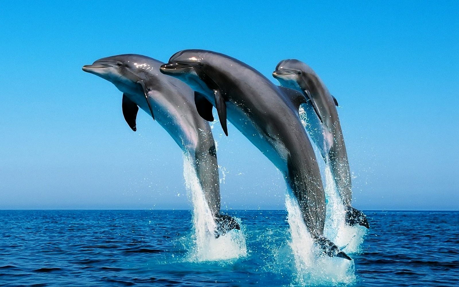 Cute Dolphins HD Wallpapers Collection Download Wallpapers in HD 1600x1000