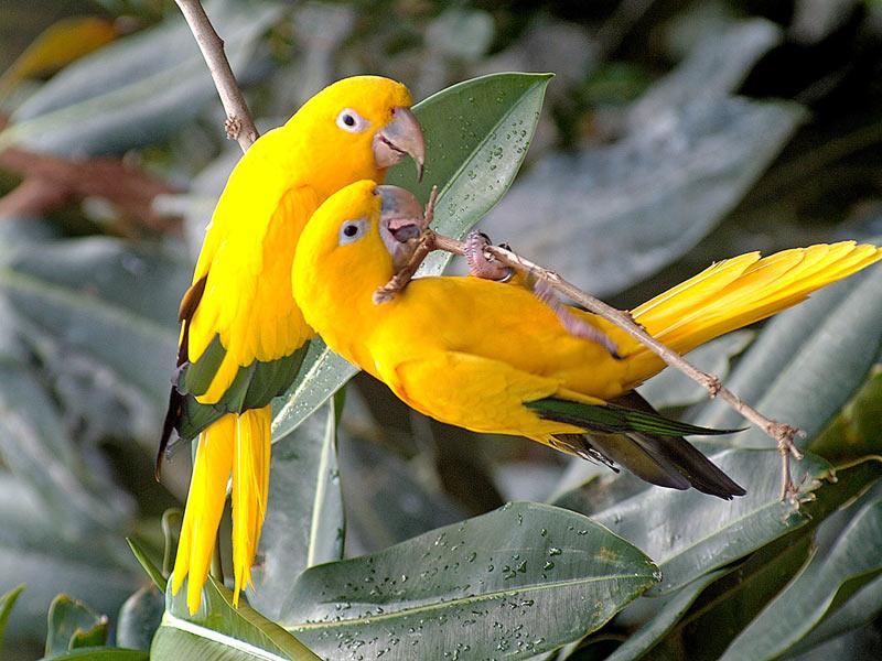 Animals Zoo Park Beautiful Birds Desktop Wallpapers 800x600