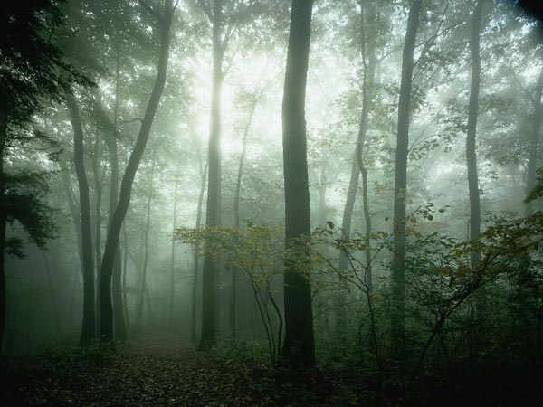 Foggy Forest by Desktop Backgrounds 600x450