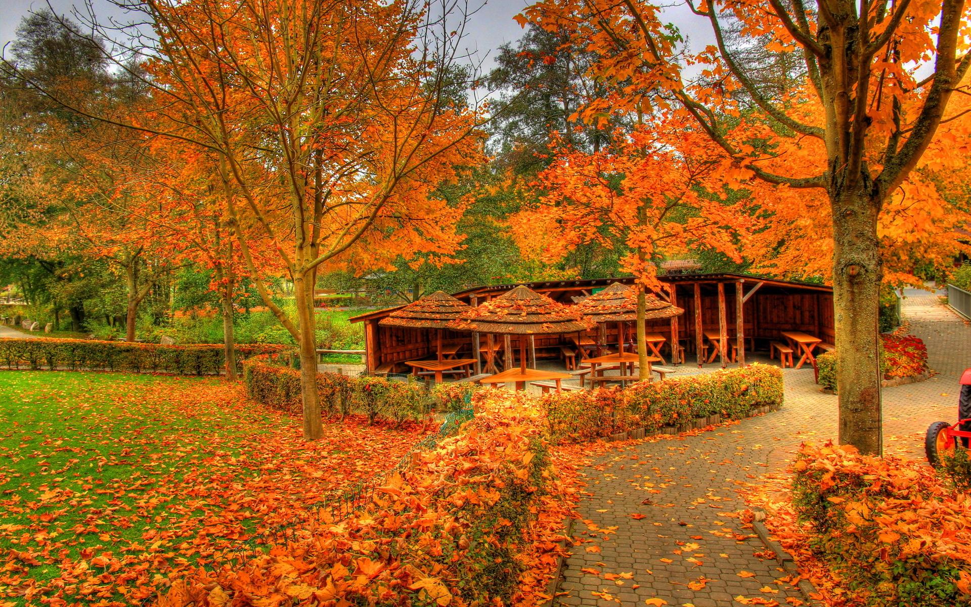 Landscapes autumn fall color wallpaper | 1920x1200 | 37358 ...