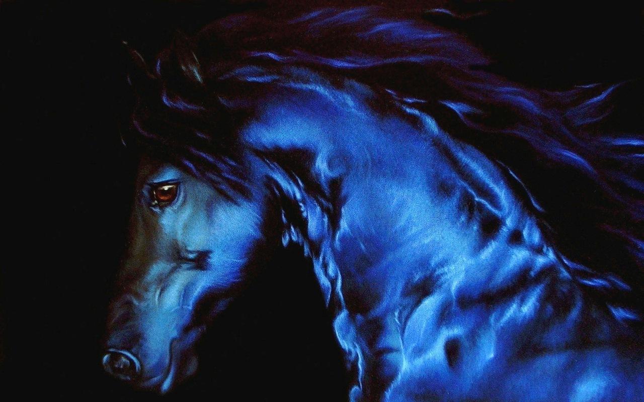 Beautiful Horse   Horses Wallpaper 22410562 1280x800