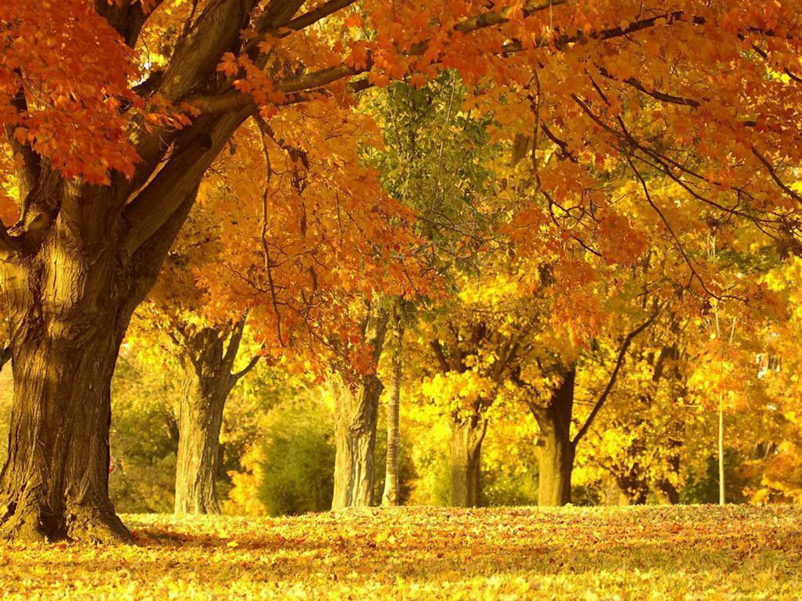 Beautiful Autumn Scenery Wallpapers   Removable Wallpapers 1600x1200