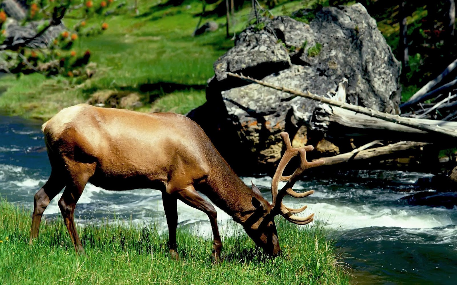 deer hd wallpapers deer hd wallpapers deer hd wallpapers deer hd 1600x1000