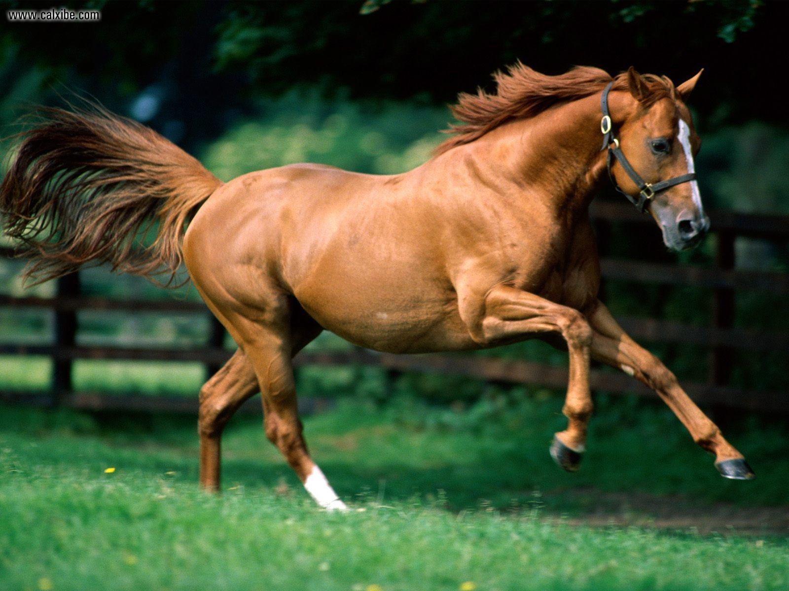 Animals Zoo Park: Horse Wallpapers, Photos, Pictures